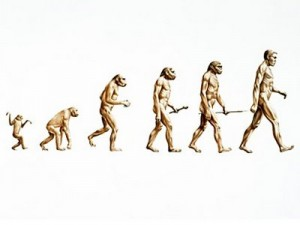 Resultado de imagem para evolução da espécie