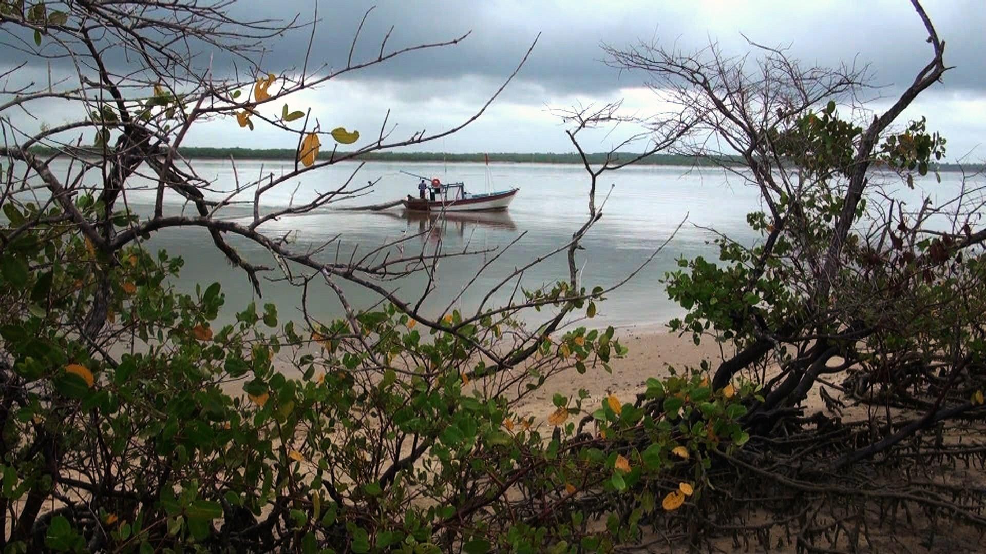 Manguezais no sul da Bahia